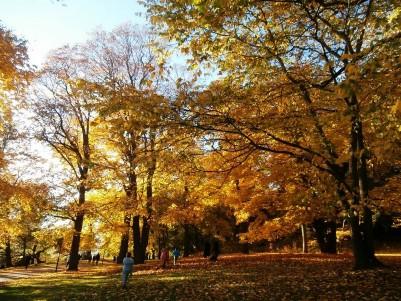 Nobel Park in autumn