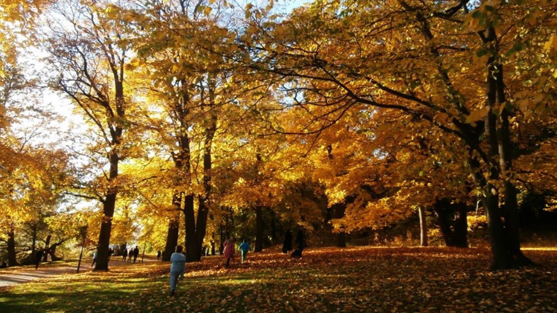 TRUE AUTUMN IN STOCKHOLM – OCTOBER
