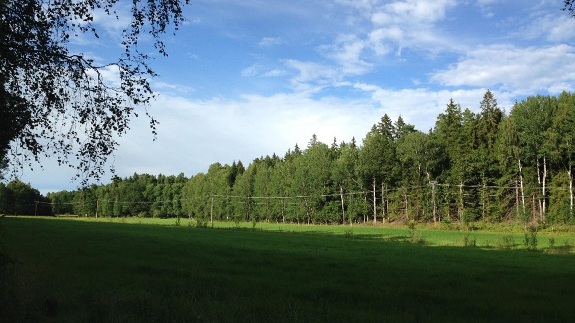 MUSHROOMING NEAR STOCKHOLM – Early Autumn – September