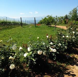 5 Kamnik vineyards ed