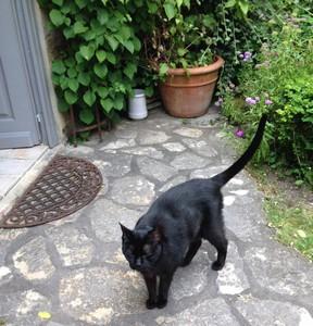 Marie-chantal's cat Cashew - M. Chat ed